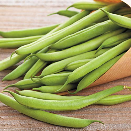 blue lake pole beans - 7