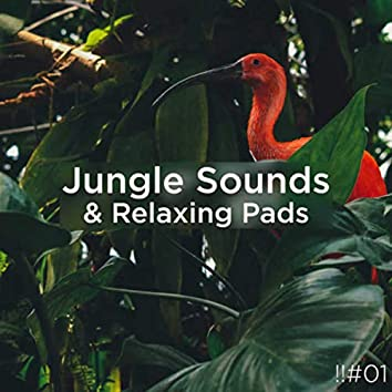 !!#01 Jungle Sounds & Relaxing Pads