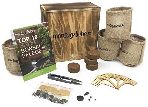 Montagsliebe® Bonsai Starter Kit Premium Geschenk Anzucht-Set 4 Sorten Holzbox GRATIS Anleitung & Schere