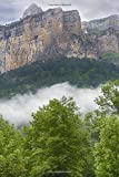 Notebook: Mountain Cliffs Forestry Trees Fog Forest Bushland Bush Mountainous