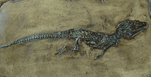 Crocodile replica from Messel Germany in museum quality; animal fossils imprint, reptile, reptilian animal, dino