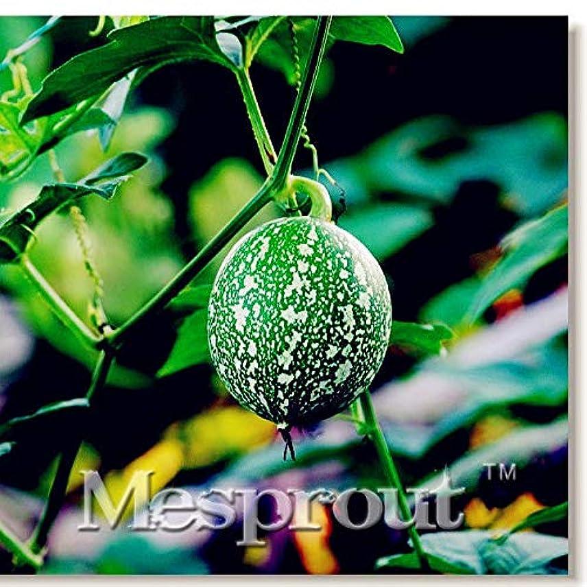 渦珍しい不完全盆栽は、メロンの種10個の種子トスKirilowi??iVegeta新しいハンギング