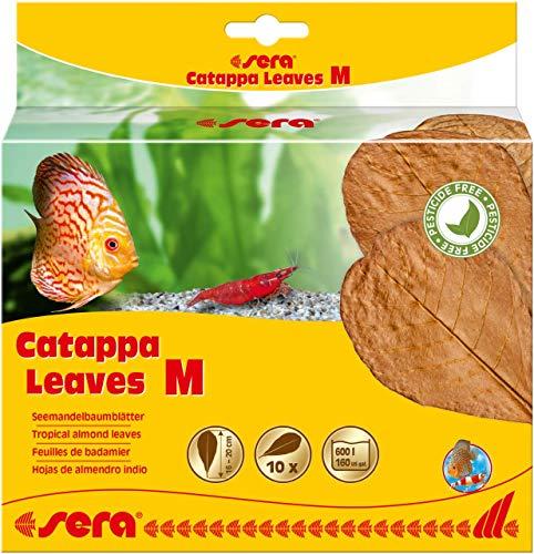 sera Catappa Leaves M 16 – 20 cm 10 St.