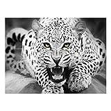 LNDDP DIY Digitale Ölgemälde DIY Gemälde Acrylfarbe Geparden füllen Farbe Malerei Kit Home Dekoration Zahlen Bild Malerei Set