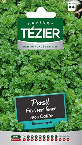 Tezier - Persil Frisé vert foncé race Calito sélection Tézier