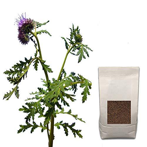 Agraria Ughetto Apicoltura FACELIA (Phacelia Tanacetifolia) Seme Certificato kg. 1   Mellifere da Semina e sovescio