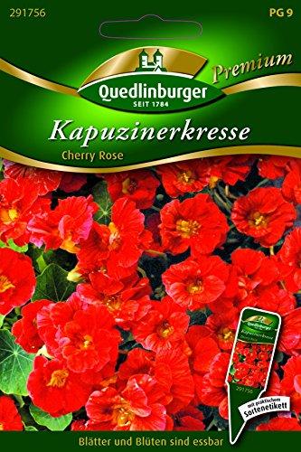 Kapuzinerkresse Black Velvet - Tropaeolum majus nanum QLB Premium Saatgut Blumen einjährig