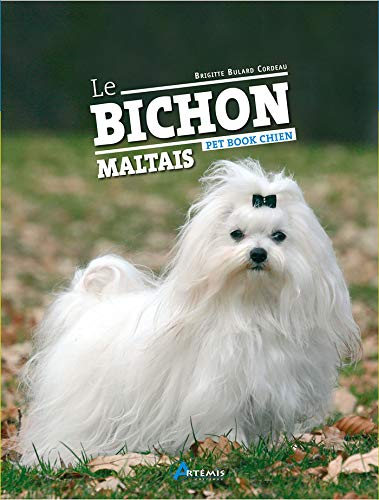 Bichon Maltais