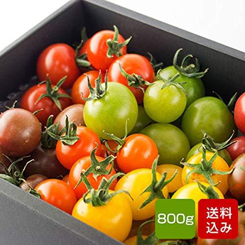 トマトの宝石箱 フルーツトマト 詰め合わせ 800g 化粧箱入り ギフト