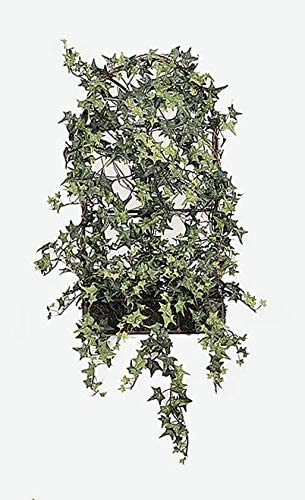 favorite 25 Inch Small Ivy with Deluxe Fence