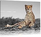 prächtiger Gepard in Savanne schwarz/weiß Format: 80x60 auf Leinwand, XXL riesige Bilder fertig gerahmt mit Keilrahmen, Kunstdruck auf Wandbild mit Rahmen, günstiger als Gemälde oder Ölbild, kein Poster oder Plakat