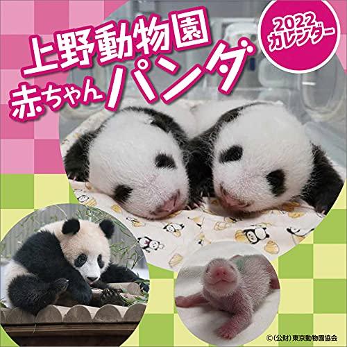 ハゴロモ 上野動物園赤ちゃんパンダ 2022年 カレンダー 壁掛け CL22-0397 白