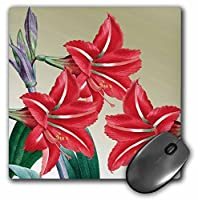 3drose LLC 8x 8x 0.25Amaryllisトリオレッド花花柄アートヴィンテージマウスパッド( MP _ 79198_ 1)