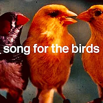 Song for the birds
