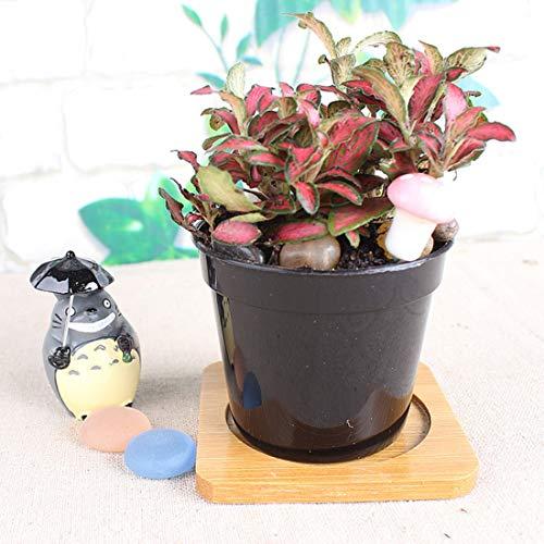 Luoshan Vasi da Fiori in plastica più Spessi Vaso Piccolo Nero for Bambini Nursery Special Disk Mini Piccolo Vaso di Fiori