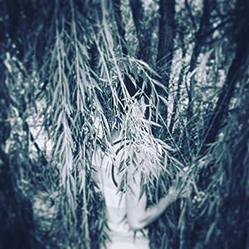 Beneath the Willow EP