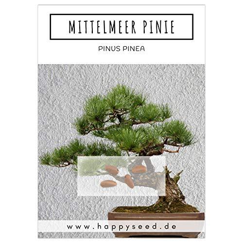 Außergewöhnliche Bonsai Samen mit hoher Keimrate - Pflanzen Samen Set für deinen eigenen Bonsai Baum (1x Mittelmeer Pinie)