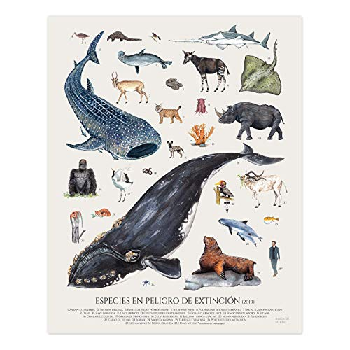 Póster de animales ilustrado en peligro de extinción. Poster vintage 40x50, Acuarela, Póster wildlife, Póster zoología, lámina didáctica - Sin Marco