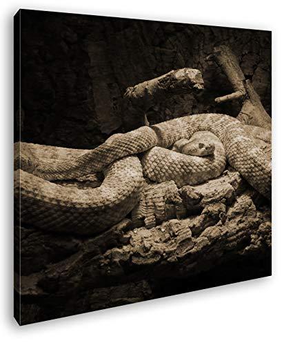 deyoli Zwei Klapperschlangen im Terrarium Format: 70x70 Effekt: Sepia als Leinwandbild, Motiv fertig gerahmt auf Echtholzrahmen, Hochwertiger Digitaldruck mit Rahmen, Kein Poster oder Plakat