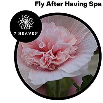 Fly After Having Spa