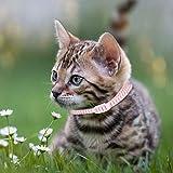 𝐂𝐡𝐫𝐢𝐬𝐭𝐦𝐚𝐬 𝐂𝐚𝐫𝐧𝐢𝒗𝐚𝐥 Collar antipiojos para Perros pequeños, Collar antiparasitario antiparasitario para Gatos, Cian para Cachorros de Perros y Gatos(Pink, M)
