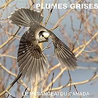 PLUMES GRISES - LE MÉSANGEAI DU CANADA (Calendrier mural 2022 300 × 300 mm Square): Rencontre avec le mésangeai du Canada (Calendrier mensuel, 14 Pages )