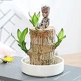 Brazilwood - Piante idroponiche, Groot Lucky Wood in vaso, brasiliano Lucky Wood Plant, Hydroponic Tree Stump, purificazione dell'aria interna (brazilwood, vaso di fiori, Groot) (bianco)