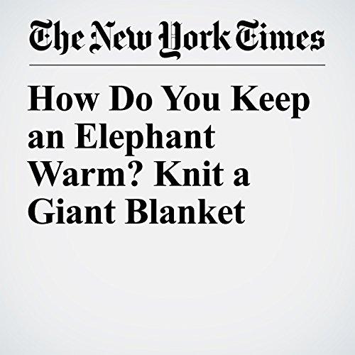 How Do You Keep an Elephant Warm? Knit a Giant Blanket copertina