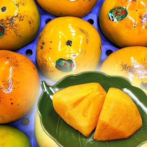 【 九州産 】 太秋柿 高級品種 訳あり ご家庭用 (箱込 約3kg前後(8〜14玉))