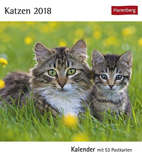 Postkartenkalender Katzen - Kalender 2018 - Harenberg-Verlag - mit 53 heraustrennbaren Postkarten - 16 cm x 17,5 cm