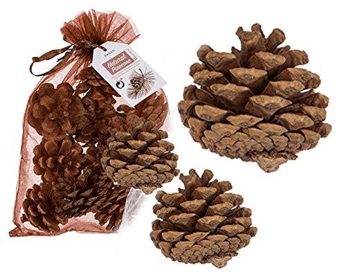 jameitop® 12 X Kiefernzapfen Natur 5-6 cm Naturzapfen Weihnachtsdeko Adventsdeko Herbstdeko