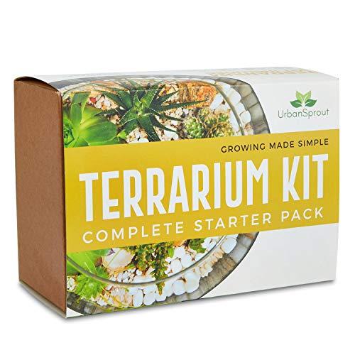 Pflanzterrarium Kit für Sukkulenten und Kakteen Inklusive Kaktuserde, Moos, Kies und Schritt-für-Schritt-Anleitung