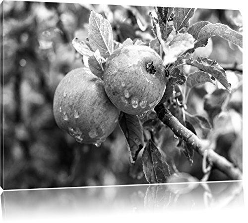 Heerlijke wilde appelen art B & WFoto Canvas | Maat: 100x70 cm | Wanddecoraties | Kunstdruk | Volledig gemonteerd
