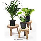 Leafy Tales Set of 3 Air Purifying Plants Combo- Areca Palm, Sansevieria Green & Green Money Plant in Black Plastic Pot| Air Purifier Live Indoor Plant. Stands for Display only.