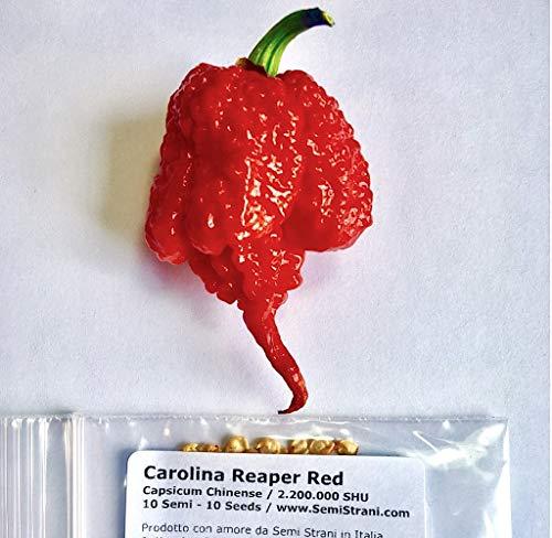 Carolina Reaper 10 Semillas Pura De El Chile Mas Picante En El Mundo 2.200.000 Shu Producciòn Italia 100%