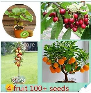 Best kendu fruit tree Reviews