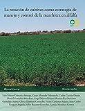La rotación de cultivos como estrategia de manejo y control de la marchitez en alfalfa