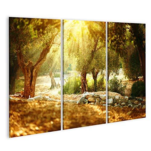 islandburner, Cuadros de Salon Jardín de olivos. Huerto mediterráneo de olivos con Olivo Viejo Cuadro Decoracion de Pared Impresión en Lienzo Formato Grande Modernos PFE-3P-N