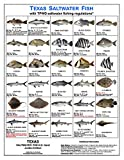 Tackle Box I.D. Texas Saltwater Fish Identification Card Set - Three Cards - 60 Common Fish - New Sept 2020 TPWD Rules!