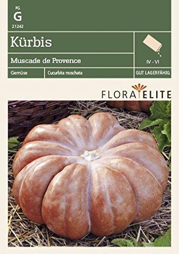 Flora Elite 21242 Kürbis Muscade de Provence (Kürbissamen)