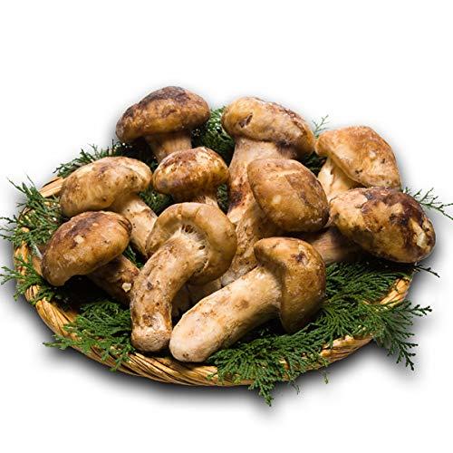 和食の匠が太鼓判「高級天然松茸」1kg/2kg (1kg)