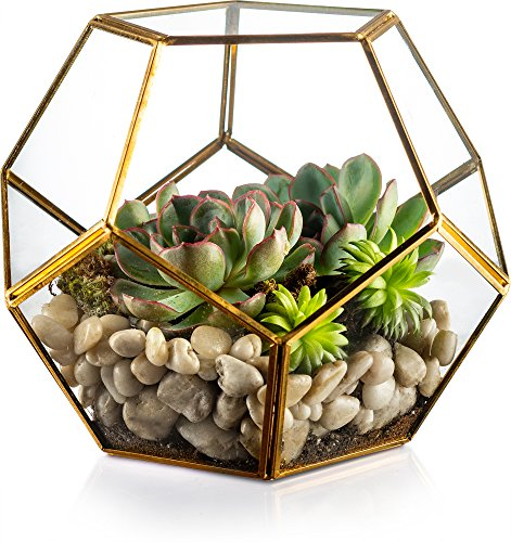 Geometric Glass Terrarium, by Kook, Plants, Succulents, Votive Candle Holder, Gold