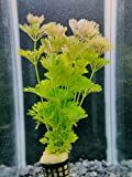 plantas acuario Limnophila sessiliflora , Ambulia