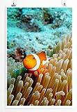 Eau Zone Home Bild - Naturbilder – Clownfisch im