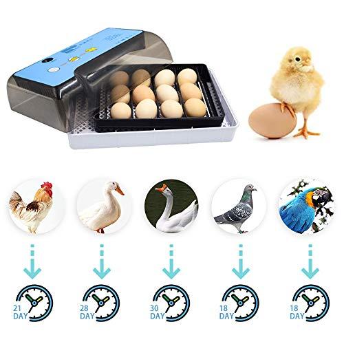 Incubadora para el hogar , control automático de temperatura, mini huevos para incubar digitales, control automático de temperatura para pollos, patos y pájaros (12eggs(upgrade)