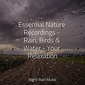 Essential Nature Recordings - Rain, Birds & Water - Your Relaxation