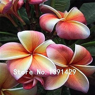50 pezzi misti fiori artificiali Hawaii Lei Plumeria Frangipani fiori per matrimonio Decor DIY ghirlanda Jewelry Accessories