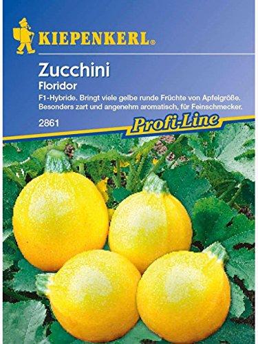 Zucchini Floridor rund gelb