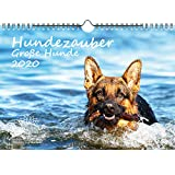 Hundezauber Große Hunde DIN A4 Kalender 2020 Welpen und Hunde - Seelenzauber