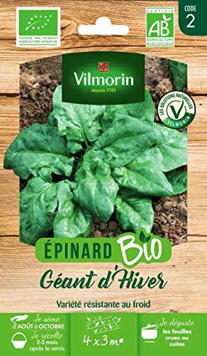 Vilmorin - Epinard géant d'hiver bio - variété très productive - résistante au froid - larges feuilles vert foncé - rendement jusqu'à 4x3 m